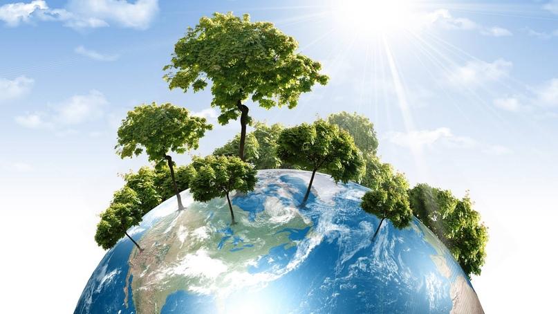 День любви к деревьям, изображение №11